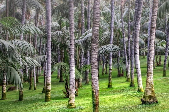 palm-trees-3769392