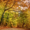 autumn-forest-3786747