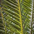palm-fronds-3807825