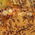 bees-4126065