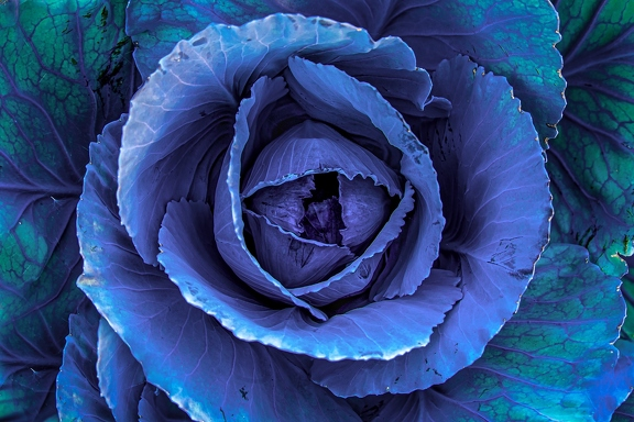 red-cabbage-4303102